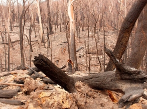 Lack of bushfire response is leaving South Coast communities exposed