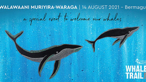 Whale Season To Open With New Cultural Event