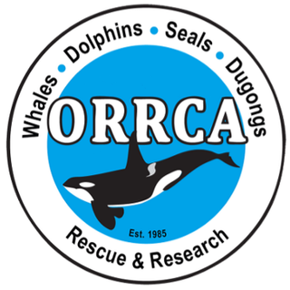 ORRCA Rescue team have had a confirmed sighting of entangled Humpback whale in Bbay area