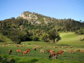 Corks pop as Eurobodalla Rural Lands Strategy passes Council