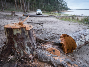 Brou Lake trees cut down at camping area