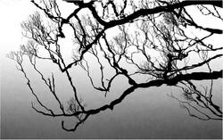 Silver - Reflections by Brian Gunter
