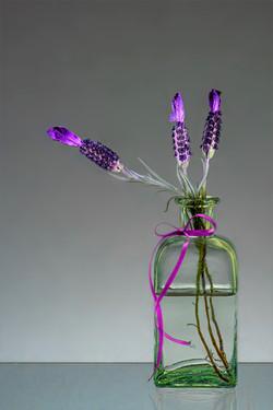 Jar of Lavender - Dave Kemp