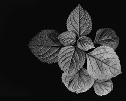 G_Leaves by Dave Kemp