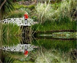 ColinPass -Hobart garden
