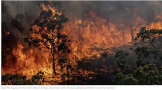 Lessons from Black Summer: how people experienced the 2019/20 NSW fire season