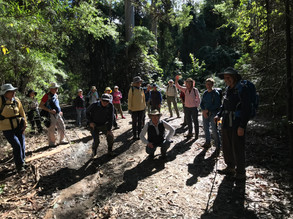 Dalmeny/ Narooma Bushwalkers - First Organized Walk since March