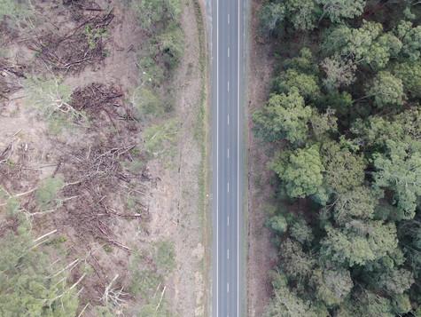 Logging 'slash' fire risk at Benandarah State Forest must be cleaned up: Independent MP