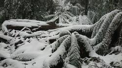 Bendoc rainforest winter wonderland