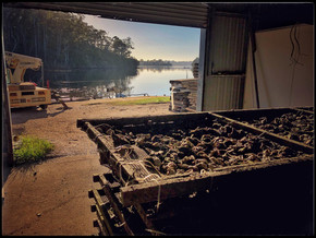 Narooma Oysters: a delectable isolation delight