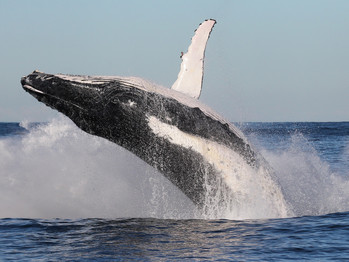 Top Whale Watching spots