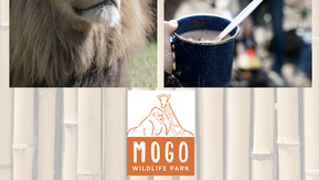 Mogo Wildlife Park camping adventures