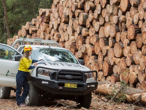 Domestic softwood timber industry sees boost from diverted exports