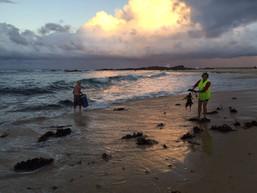 Tilba's Joanne Lane brings kelp to #allkindsofnatural