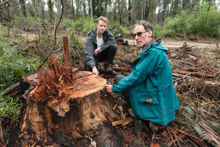 Forestry Corporation must investigate breaches of post-fire logging standards in Mogo State Forest