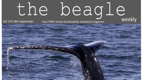 Beagle Weekender of September 18th 2020