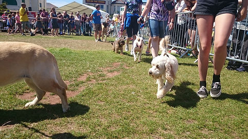 Paignton Regatta 2016 Fun Dog Show