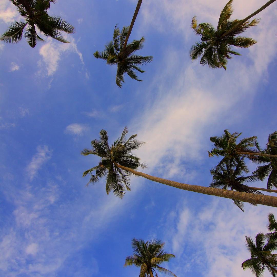sky and palms tree
