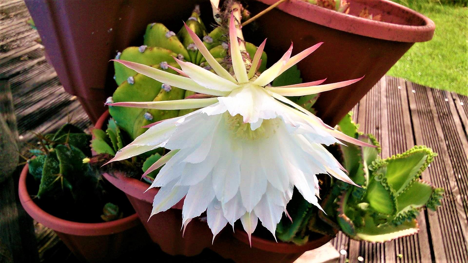 deco-fleur-de-coco-gwada
