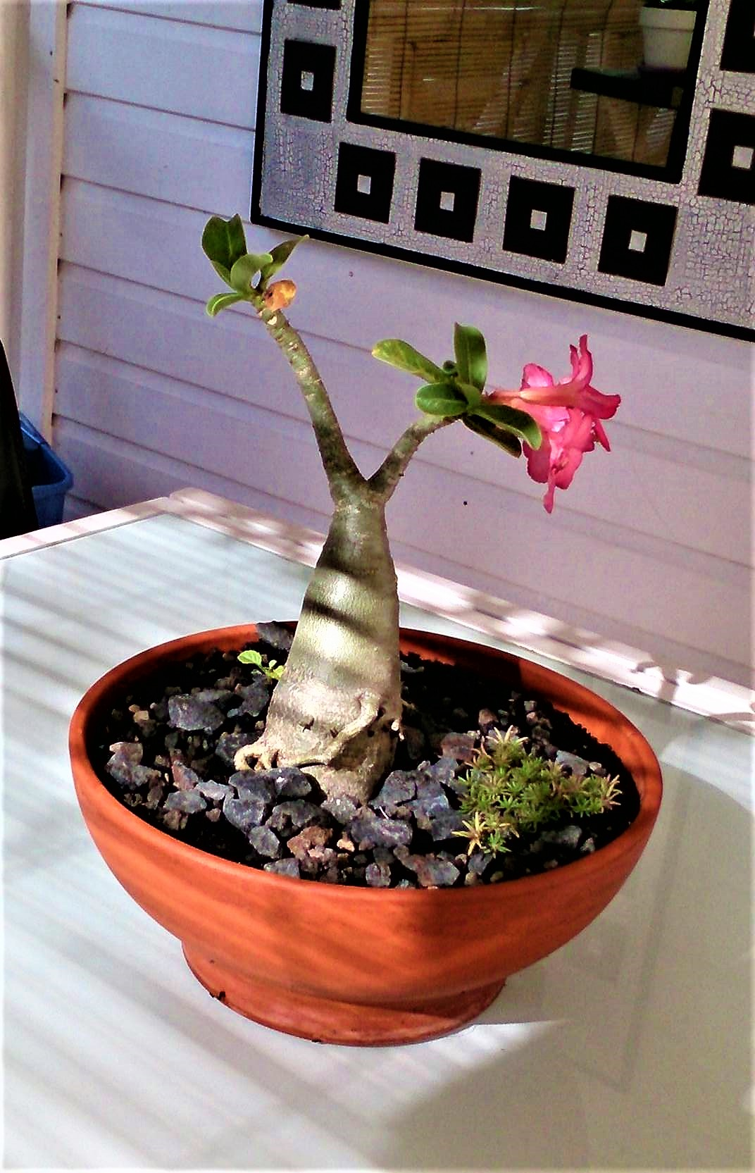 deco-fleur-de-coco