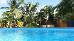 piscine-privée-cocotier