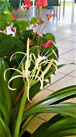 fleur-de-coco-gwada