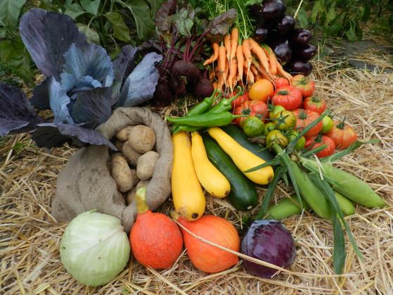 Soutien à l'agriculture locale et bio