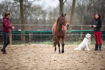How to Horse - lessen (5).jpg