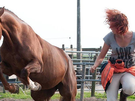 Welkom bij How To Horse!