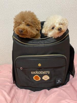 moko-meru_wappen02.jpg
