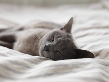 勉強も睡眠と上手に向き合う。不眠症の原因と分類