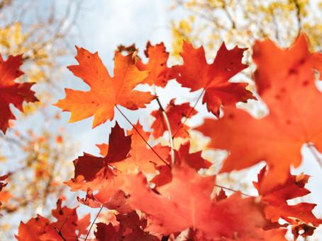 知ってますか?秋は受験で最初のチャンスです