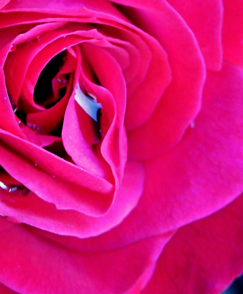 rose%2520w%2520droplets_edited_edited.png