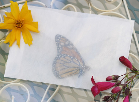 Butterfly Release at Weddings