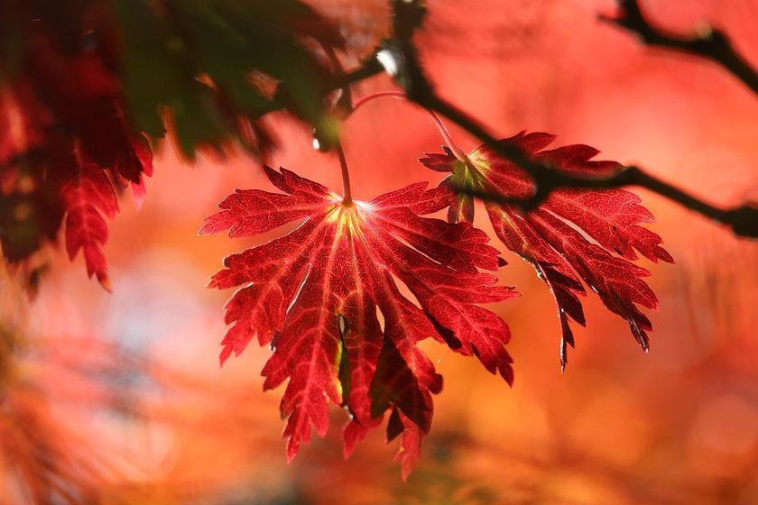 leaves-5705990.jpg