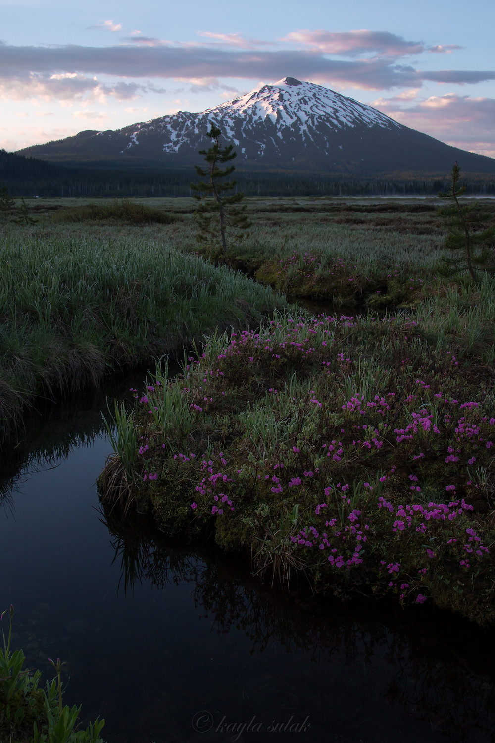Mount Bachelor and flower meadows at sunrise, June 2019