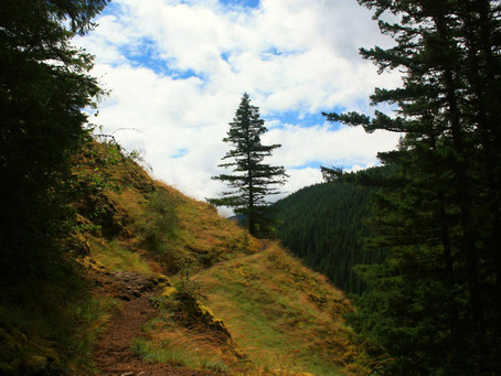 Salmon River Trail #742A: a rambling river walk, hike-in campsites, and more