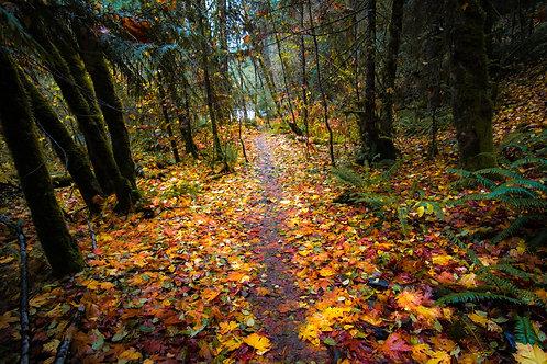 """Autumn Strolling"""