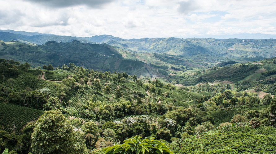 Colombia coffee valley.jpg