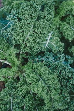 Vates Kale