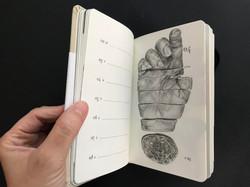 מאיה אטון, 2018 ספר אמן ויומן שבועי, 17X11 סמ (4)