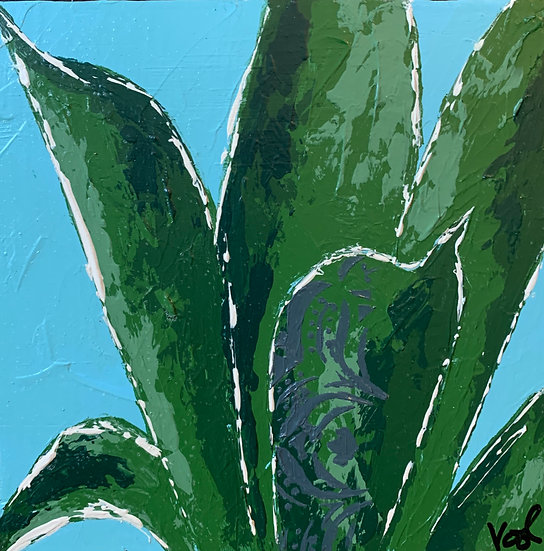 Small Agave 4