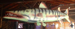 Barracuda Collab