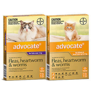 Advocate for Small Cats 0-4kg.....from