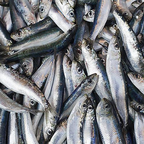 Whole Sardines - 1kg
