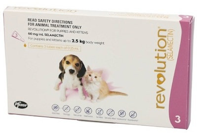 Revolution Pink - Pup/Kit (Up to 2.5kg).....from