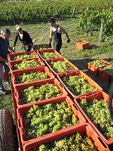 Touraize Vineyards