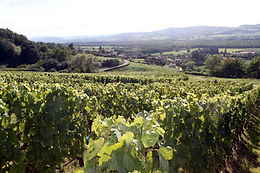 Vineyards of Domaine Christophe Perrin Burgundy, France