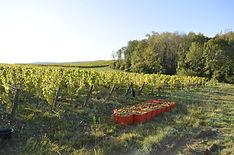 Touraize Winery