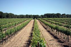 Azagador Vineyards, Spain